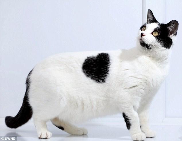 Cat - OSWNS