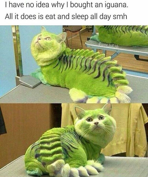 Cat is styled to look like iguana, caption of fphoto says the person doesn't know why they bought an iguana - all they do is eat and sleep.