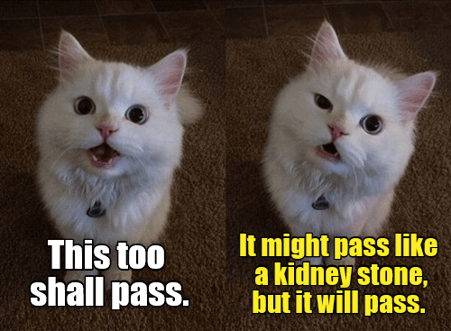 cat meme - Cat - It might pass like a kidney stone, but it will pass. This too shall pass.
