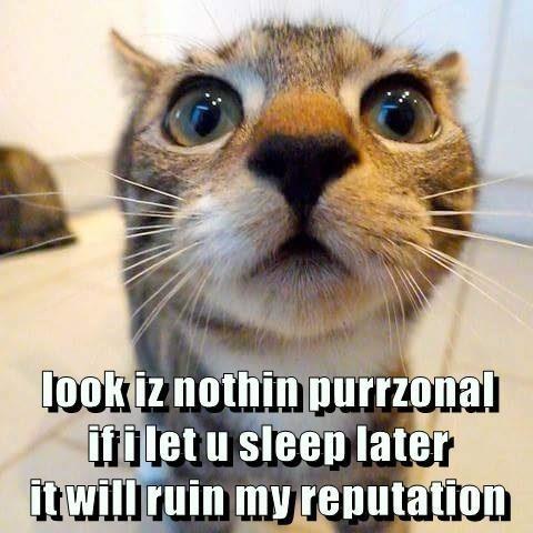 cat meme - Cat - lookiznothin purrzonal Ilet u sleep later itwill ruin my reputation