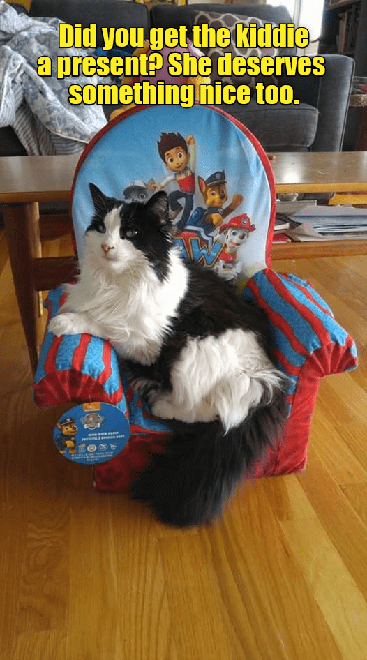 cat meme - Cat - Did you get the kiddie a present? She deserves something nice too.