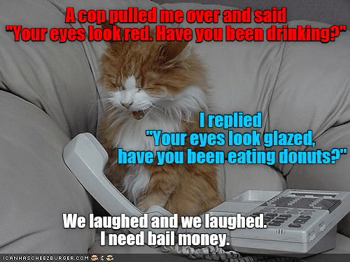 """cat meme - Cat - Acop pulled me Over and said """"Your eyes look reds Have you been drinking?"""" Ireplied) """"Your eyes lookglazed have you beeneating donuts?"""" We laughed and we laughed Ineed bail money ICANHASCHEEZEURGER.COM"""