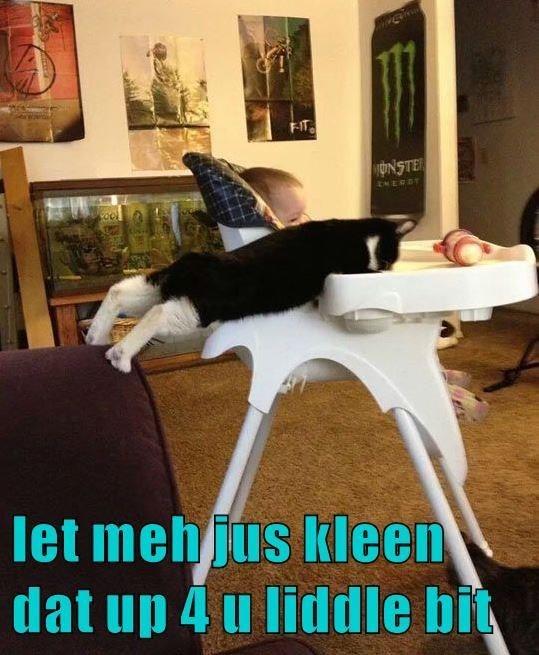 cat meme - Photo caption - F-IT yONSTER let mehjus kleen dat up 4 u liddle bit