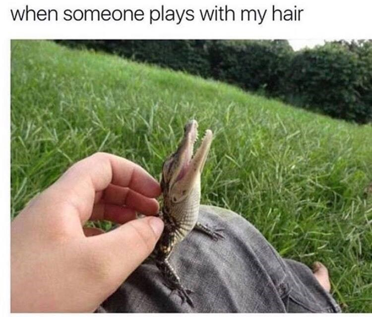 "Photo of baby alligator being pet by a human, looks like it is saying ""ahh."""