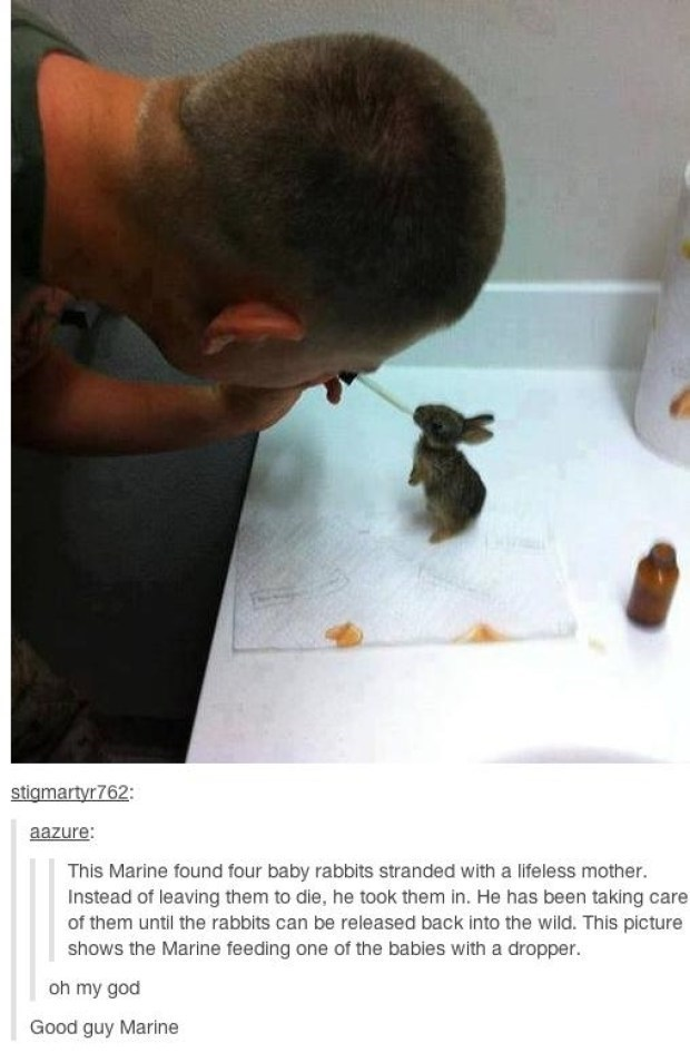 Adaptation - stigmartyr762: aazure: This Marine found four baby rabbits stranded with a lifeless mother. Instead of leaving them to die, he took them in. He has been taking care of them until the rabbits can be released back into the wild. This picture shows the Marine feeding one of the babies with a dropper oh my god Good guy Marine