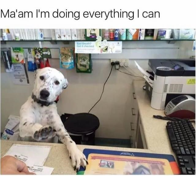 Dog looks like it's a secretary dealing with an annoying customer.