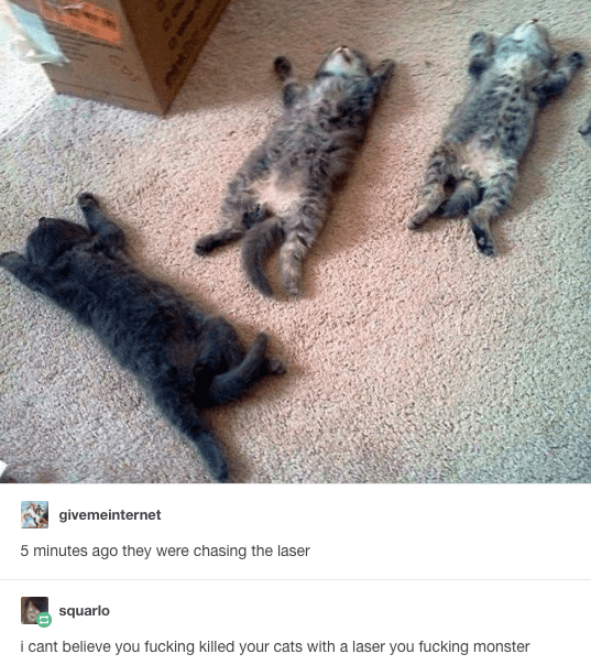 Funny picture of passed out kittens after they chased a laser too much, with a joke comment that he killed his kittens with a laser.