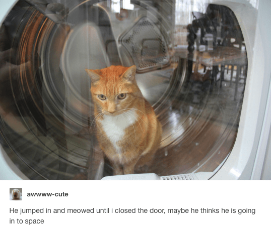 Funny picture of a cat in a washing machine, explained in the caption that the cat meowed till he got inside, now things he is going to space or who knows what.