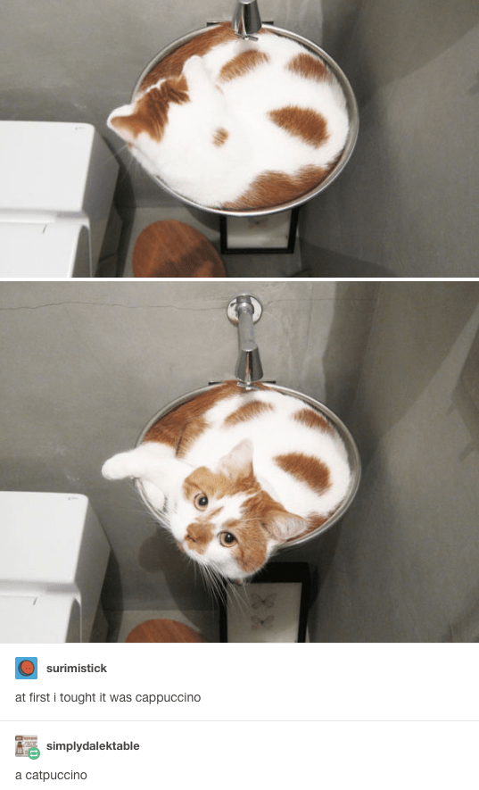 Funny pictures of a cat in a scale like he is liquid.