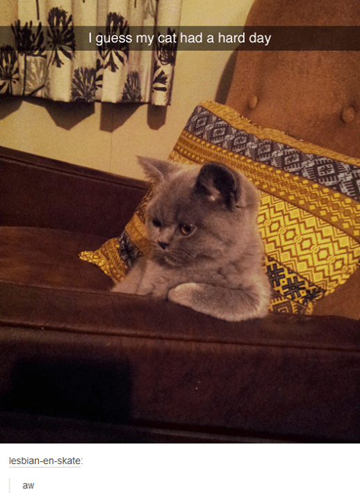 Funny picture of a cat resting on the couch like he had a rough day and needs to think about things.