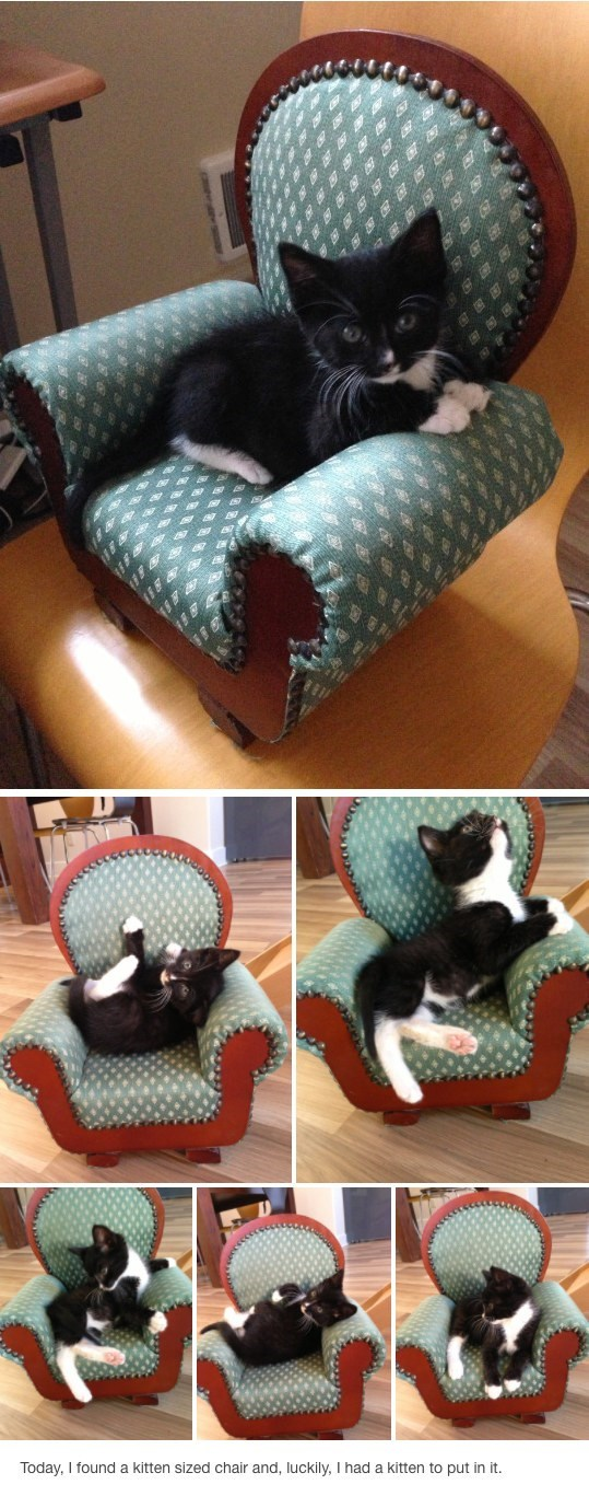 Funny pictures of a kitten and a kitten-sized chair that he is playing on.