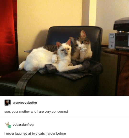 Funny picture of two cats listening to you like they are your parents and created into a funny meme.