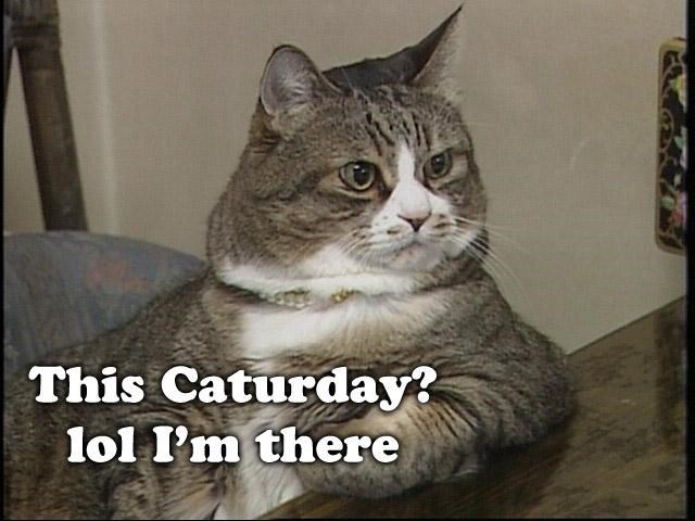 Funny picture of a cat with an lol caption about Caturday.