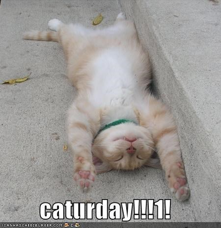 Funny picture of a cute cat lying down on the sidewalk with his hands in the surrender position.