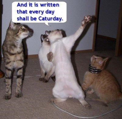 Funny picture of a cat standing up and declaring something with a caption declaring everyday Caturday.
