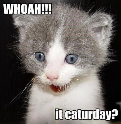 Cute cat meme of a kitten being surprised it is already Caturday.