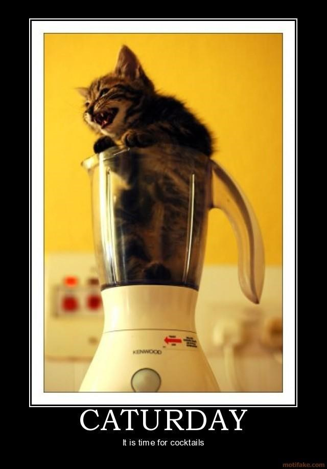 Funny picture of a kitten inside a blender with a joke that it is time to make Caturday cocktails.