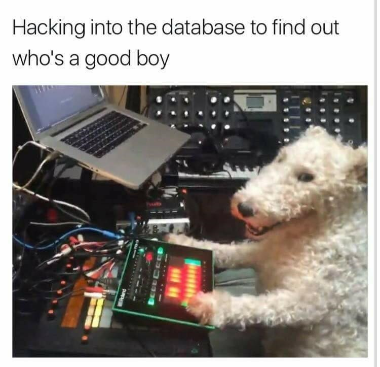 Dog hacking into database to find out if he is a good boy.