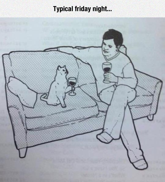 Evening night with my cat