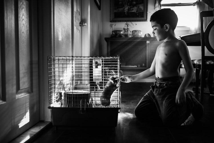 boy and hit pet pics - White
