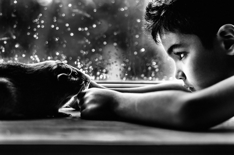 boy and hit pet pics - Black