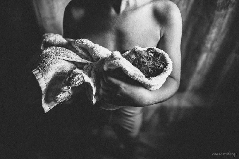 boy and hit pet pics - White - ana rosenberg