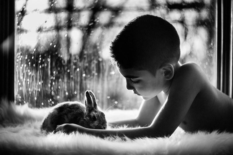 boy and hit pet pics - Photograph