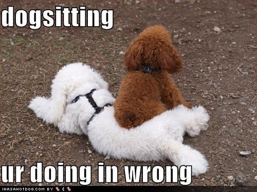 Dog - dogsitting ur doing in wrong IHASAHOTDOG.COM BY