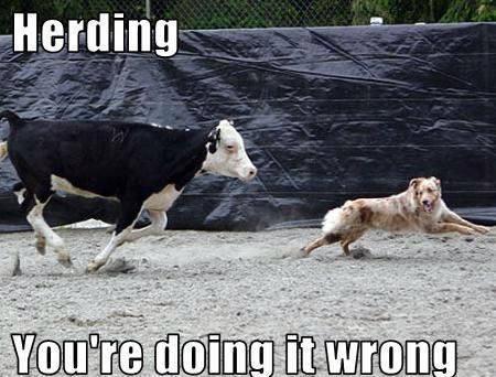 Vertebrate - Herding You're doing it wrong