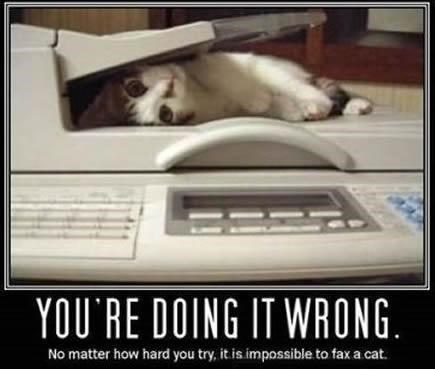 Cat - YOU'RE DOI NG IT WRUNG No matter how hard you try, it is.impossible to fax a cat.