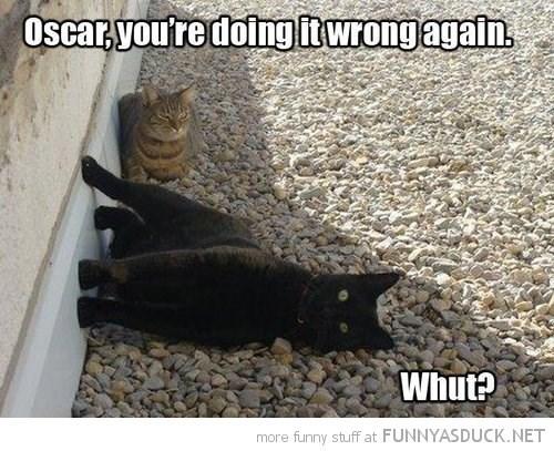 Cat - Oscaryou're doingit wrongagain Whut? more funny stuff at FUNNYASDUCK.NET