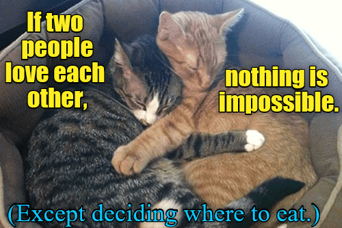 people each other impossible eat love nothing where caption Cats deciding two