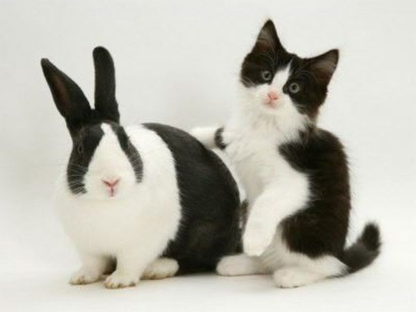 Cute cat and bunny rabbit that are identical twins if they weren't different species.