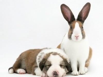 Cute puppy and bunny rabbit picture.