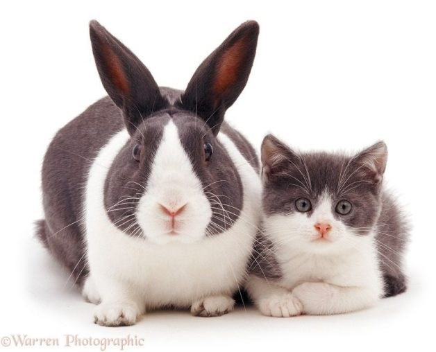 Funny cute bunny and rabbit that have the same white and gray fur patterns.