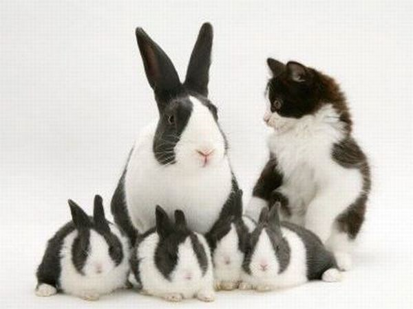 Cat and Rabbit momma with little bunnies.