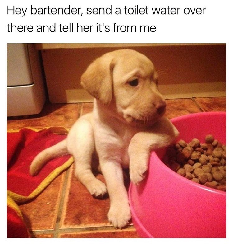 dog meme of a puppy leaning against a food bowl
