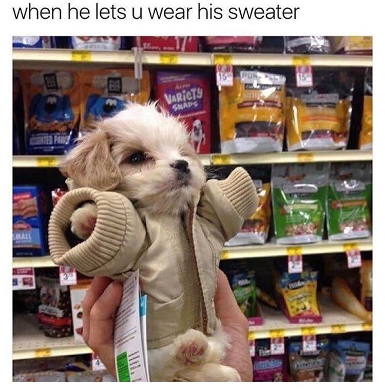 dog meme of a puppy wearing a sweater that is too big for him