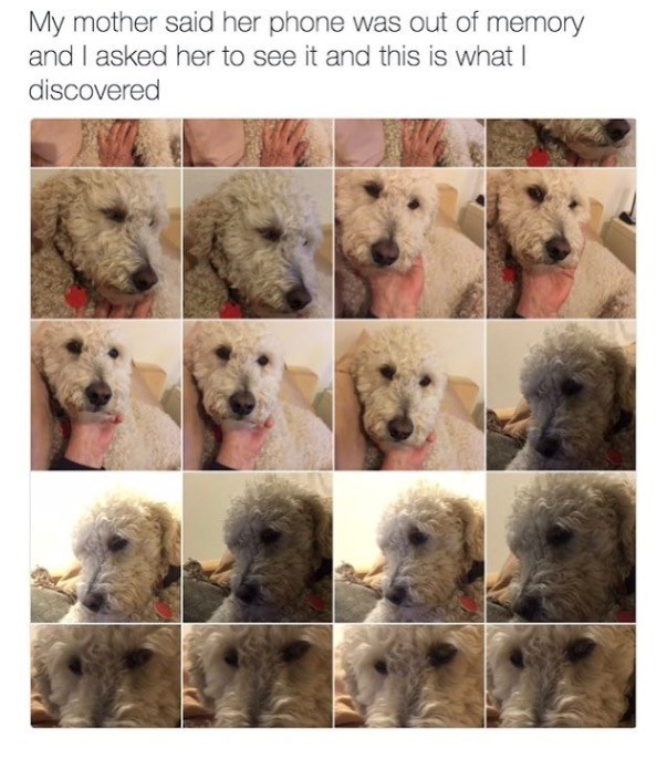 dog meme of a mom that took so many pics of her dog that she didn't have memory left on it