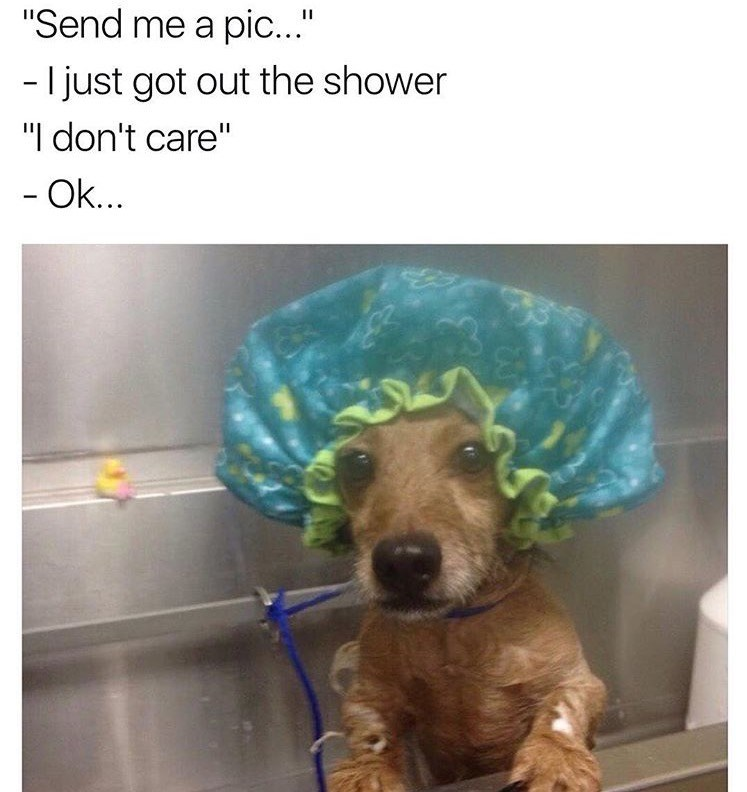 dog meme of a puppy wearing a showercap in the shower