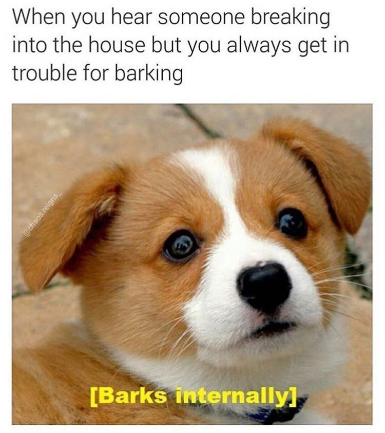 dog meme of a dog that wants to bark but can't because your owners will get mad
