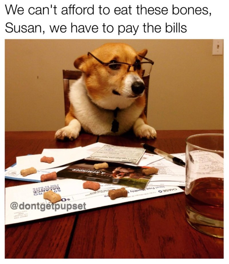 dog meme wearing sunglasses and saying they can't afford bones