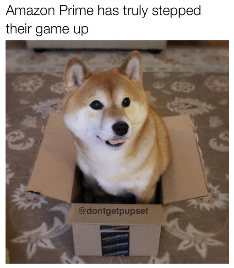 Dog meme of a dog sitting inside an Amazon Prime box