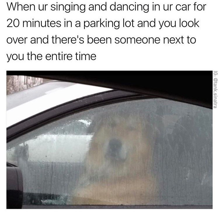 dog meme about not realizing someone has been watching you singing in your car