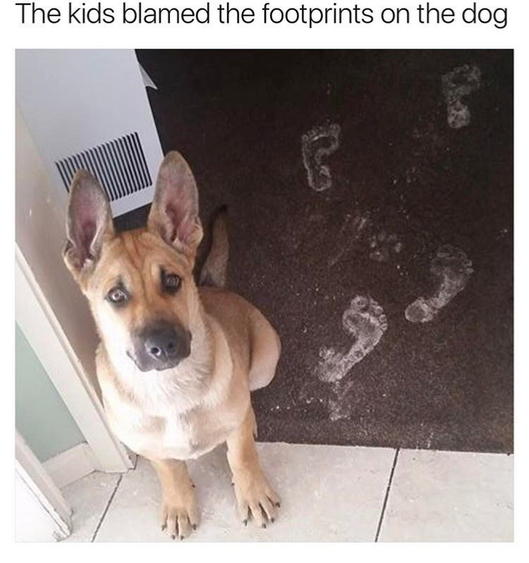 dog meme about kids that blamed their dog for human footprints in the house