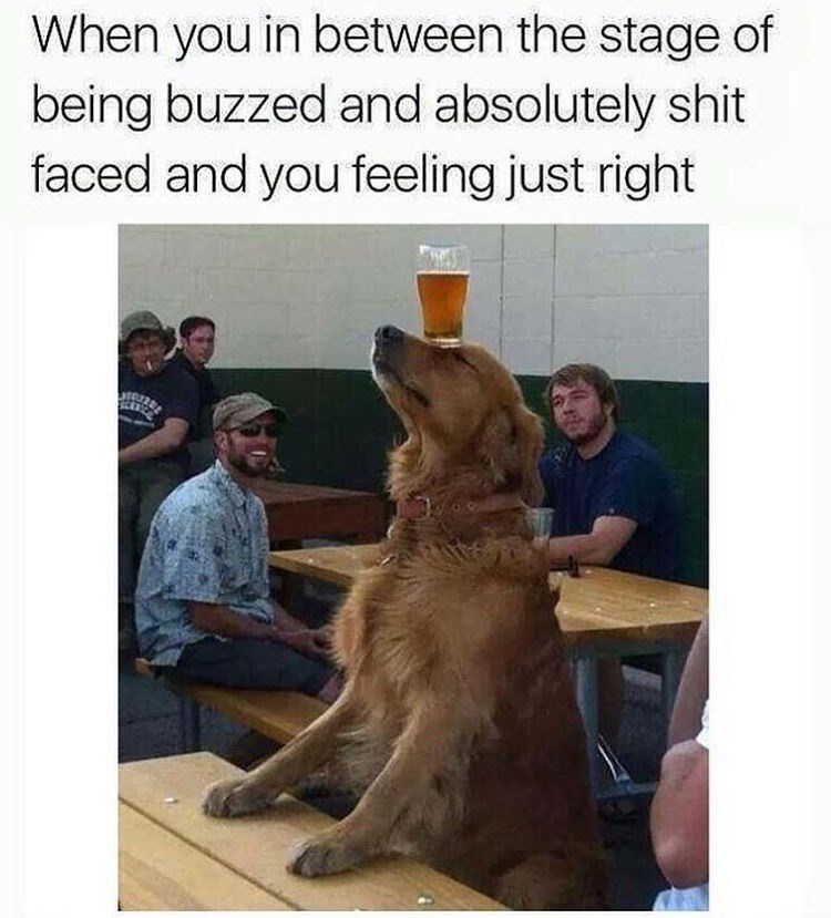 dog meme of a golden retriever balancing a cup of beer on its head