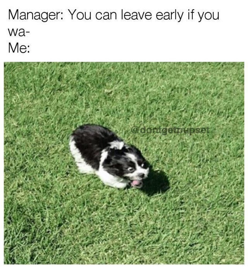 dog meme of a really excited dog running through grass