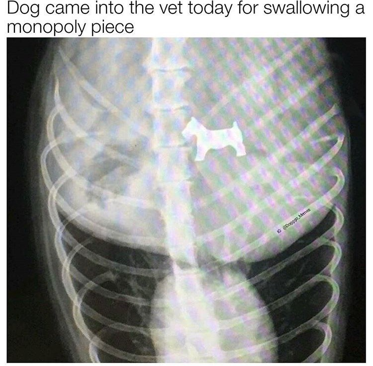 dog meme of a dog that swallowed the dog monopoly piece