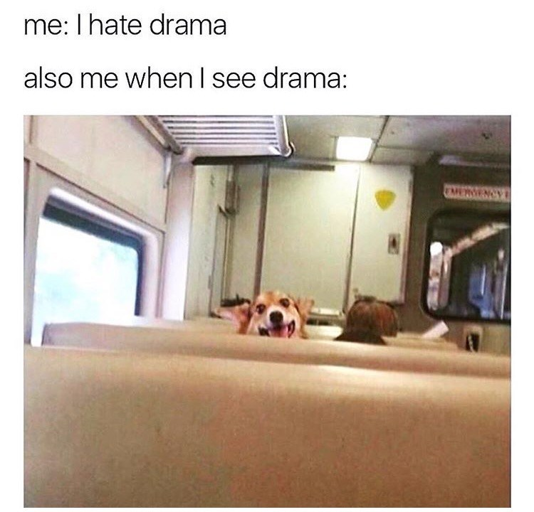 dog meme about not liking drama but also excited when there is drama