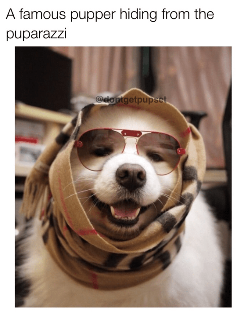 dog meme wearing a scarf and sunglasses